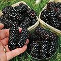 Blackberry For Sale
