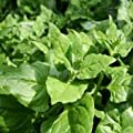 Spinach Seeds For Sale